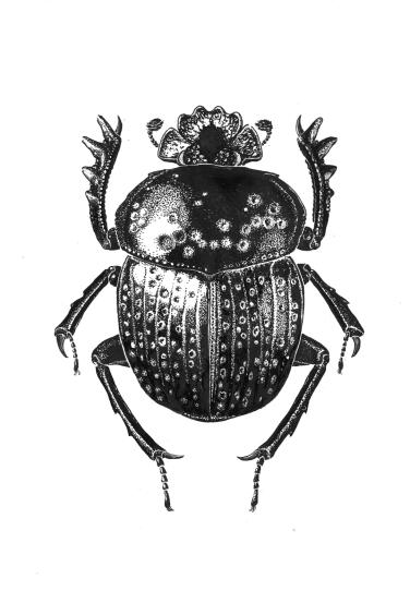 Scarabaeidae variolosus